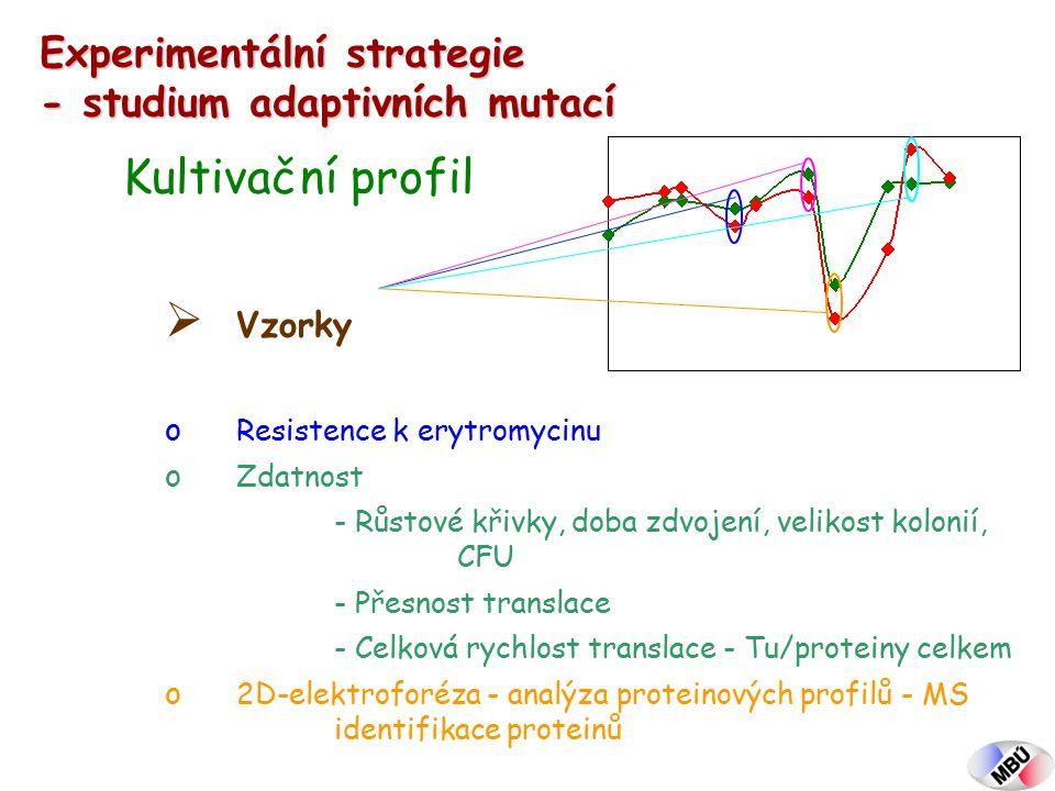 Experimentální strategie - studium adaptivních mutací Kultivační profil  Vzorky o Resistence k erytromycinu o Zdatnost - Růstové křivky, doba zdvojení, velikost kolonií, CFU - Přesnost translace - Celková rychlost translace - Tu/proteiny celkem o 2D-elektroforéza - analýza proteinových profilů - MS identifikace proteinů