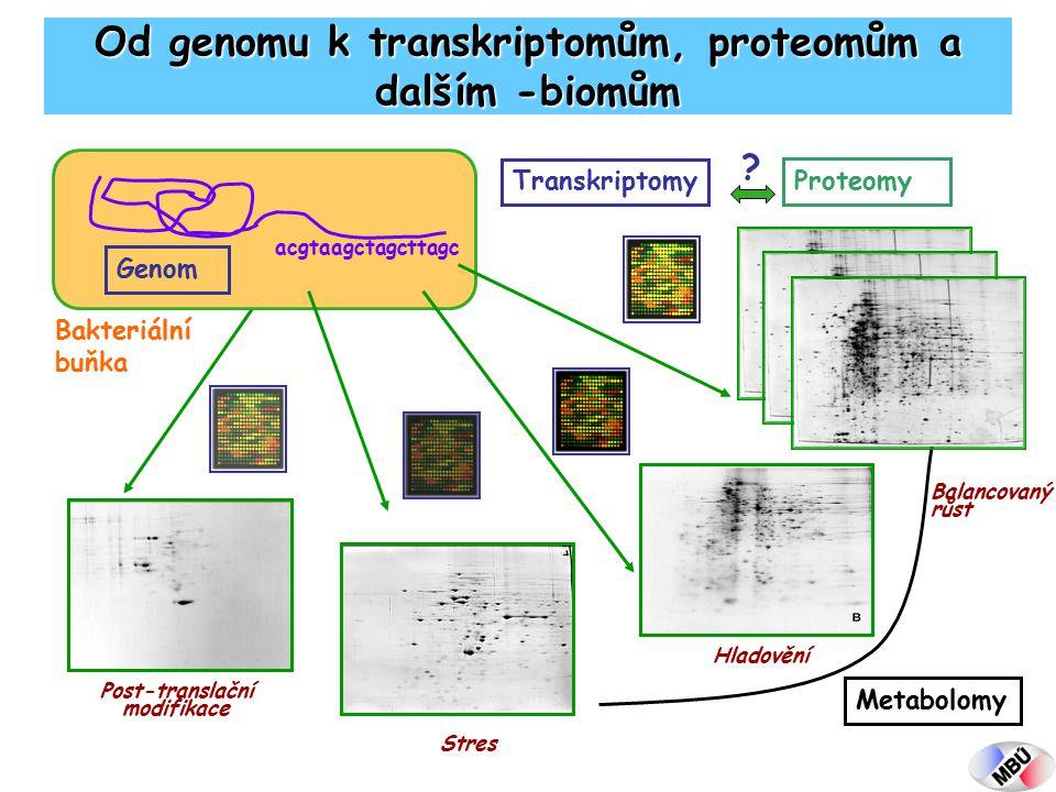 acgtaagctagcttagc Bakteriální buňka Genom Proteomy Balancovaný růst Hladovění Stres Post-translační modifikace Od genomu k transkriptomům, proteomům a dalším -biomům Transkriptomy .