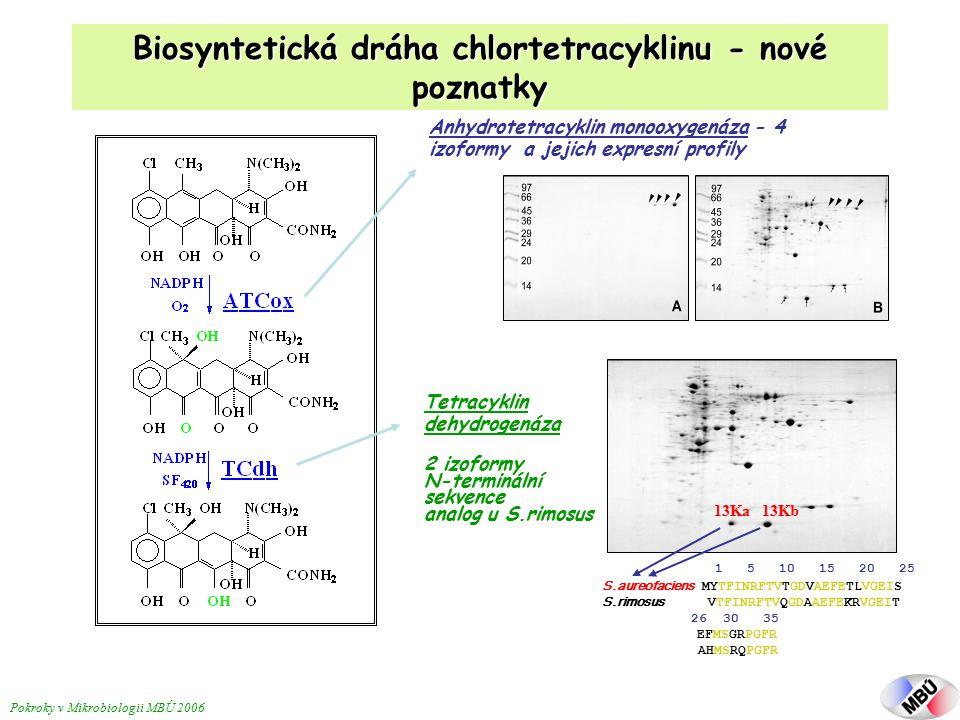 Biosyntetická dráha chlortetracyklinu - nové poznatky 1 5 10 15 20 25 S.aureofaciens MYTFINRFTVTGDVAEFETLVGEIS S.rimosus VTFINRFTVQGDAAEFEKRVGEIT 26 30 35 EFMSGRPGFR AHMSRQPGFR 13Ka 13Kb Tetracyklin dehydrogenáza 2 izoformy N-terminální sekvence analog u S.rimosus Anhydrotetracyklin monooxygenáza - 4 izoformy a jejich expresní profily Pokroky v Mikrobiologii MBÚ 2006