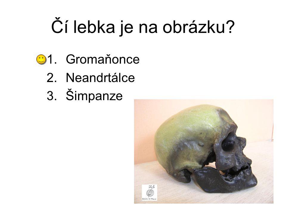 Čí lebka je na obrázku? 1.Gromaňonce 2.Neandrtálce 3.Šimpanze