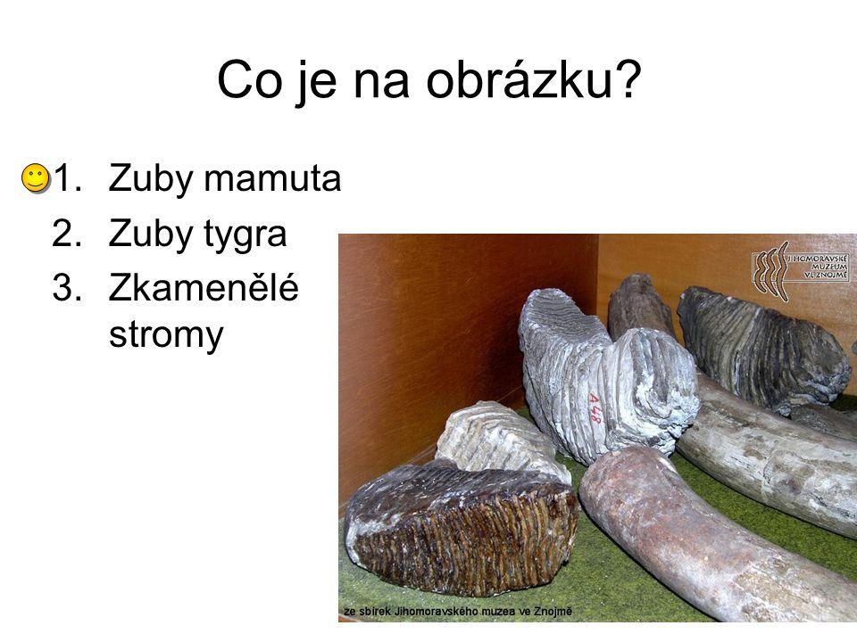 Co je na obrázku? 1.Zuby mamuta 2.Zuby tygra 3.Zkamenělé stromy