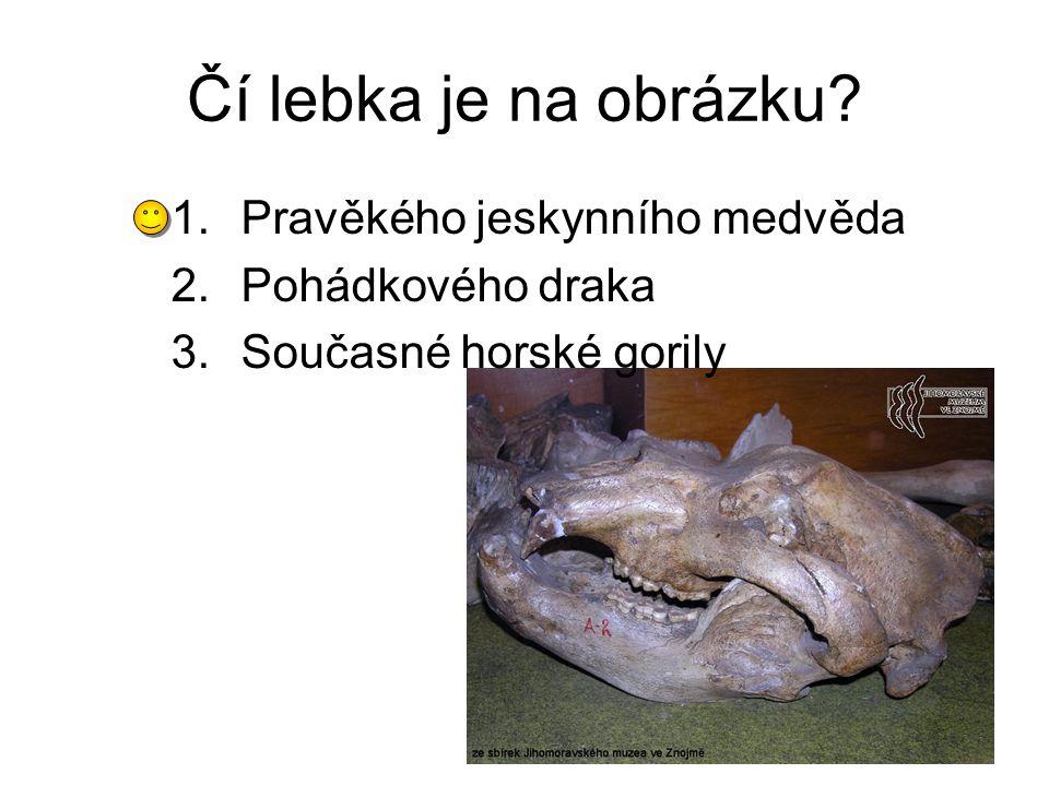 Čí lebka je na obrázku? 1.Pravěkého jeskynního medvěda 2.Pohádkového draka 3.Současné horské gorily