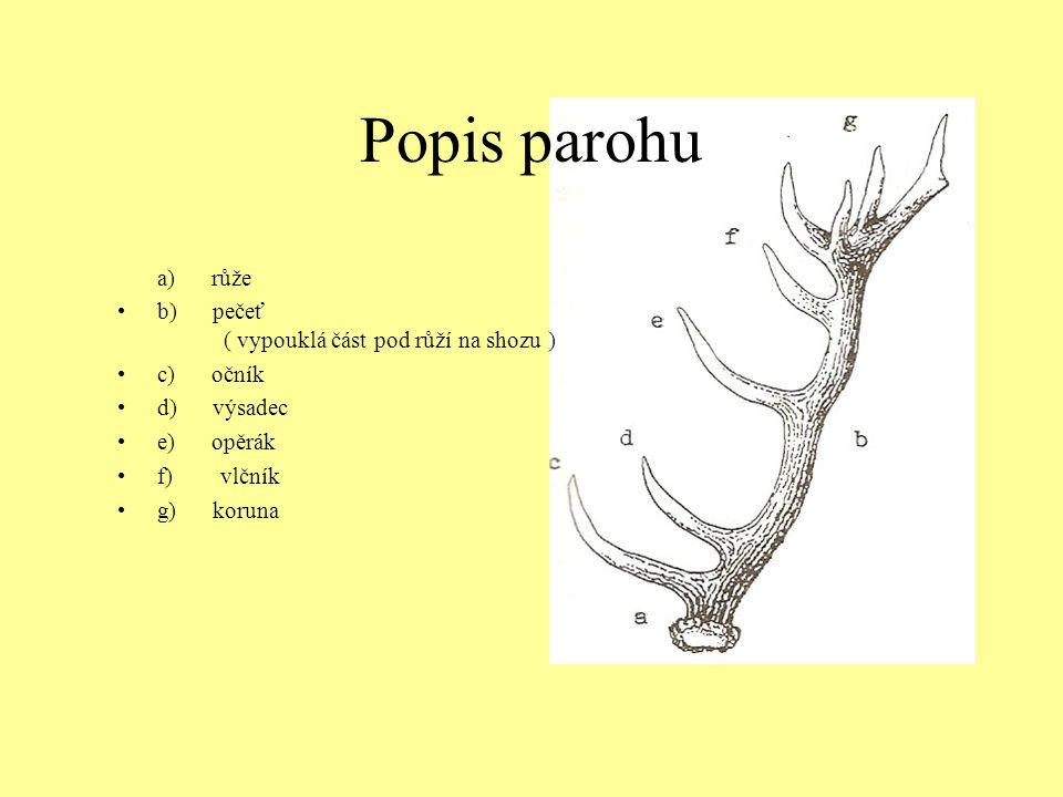 Popis parohu a) růže b) pečeť ( vypouklá část pod růží na shozu ) c) očník d) výsadec e) opěrák f) vlčník g) koruna