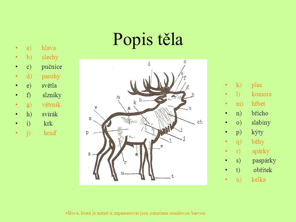 Popis těla a) hlava b) slechy c) pučnice d) parohy e) světla f) slzníky g) větrník h) svírák i) krk j) hruď k) plec l) komora m) hřbet n) břicho o) slabiny p) kýty q) běhy r) spárky s) paspárky t) obřitek u) kelka Slova, která je nutné si zapamatovat jsou označena oranžovou barvou.