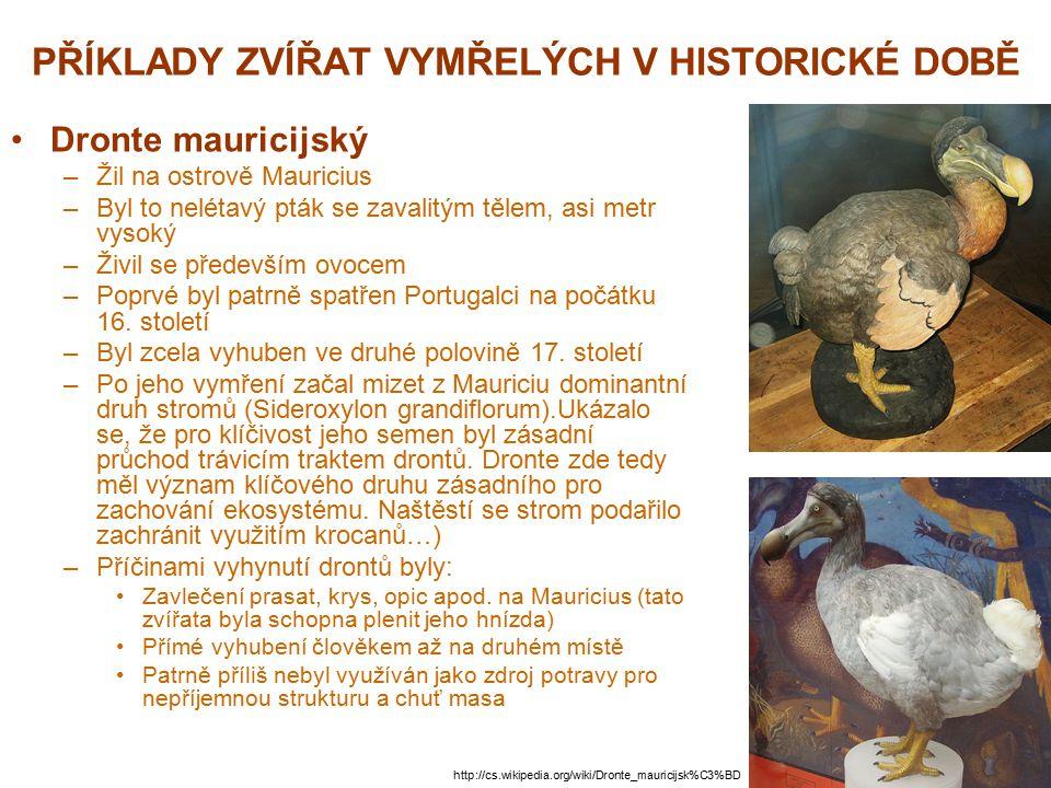 PŘÍKLADY ZVÍŘAT VYMŘELÝCH V HISTORICKÉ DOBĚ Dronte mauricijský –Žil na ostrově Mauricius –Byl to nelétavý pták se zavalitým tělem, asi metr vysoký –Ži
