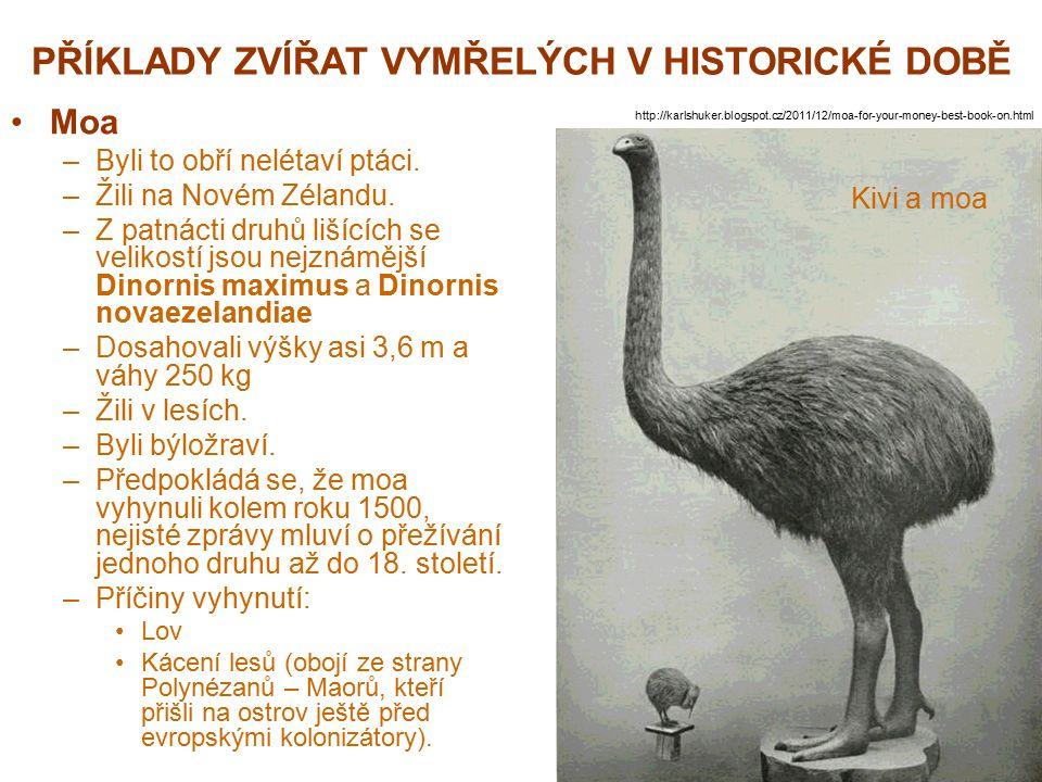 PŘÍKLADY ZVÍŘAT VYMŘELÝCH V HISTORICKÉ DOBĚ Moa –Byli to obří nelétaví ptáci. –Žili na Novém Zélandu. –Z patnácti druhů lišících se velikostí jsou nej