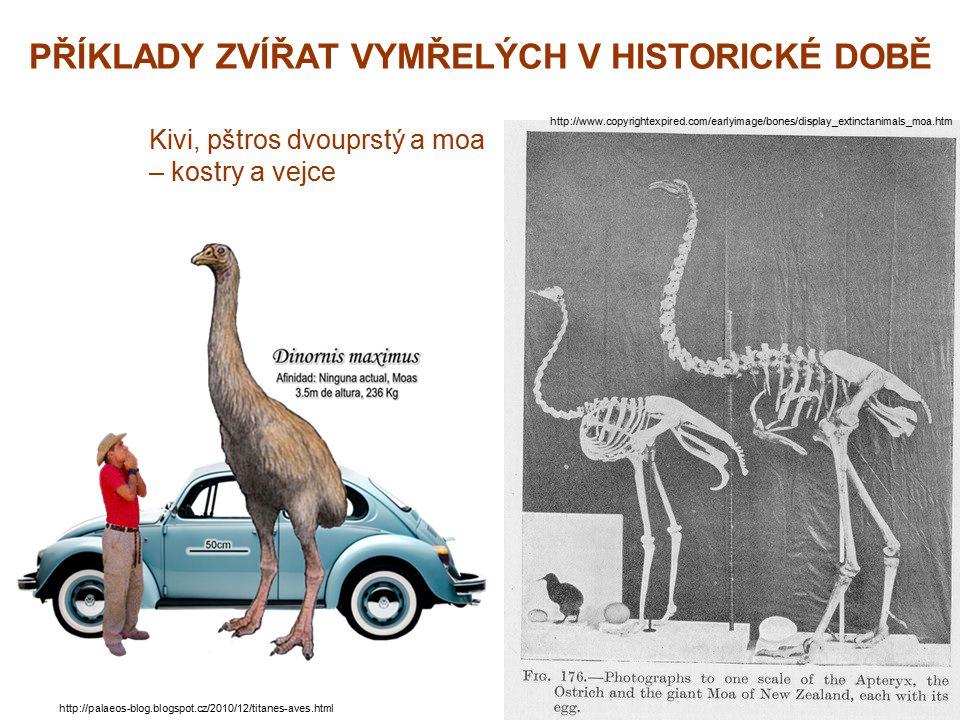 PŘÍKLADY ZVÍŘAT VYMŘELÝCH V HISTORICKÉ DOBĚ http://www.copyrightexpired.com/earlyimage/bones/display_extinctanimals_moa.htm Kivi, pštros dvouprstý a m