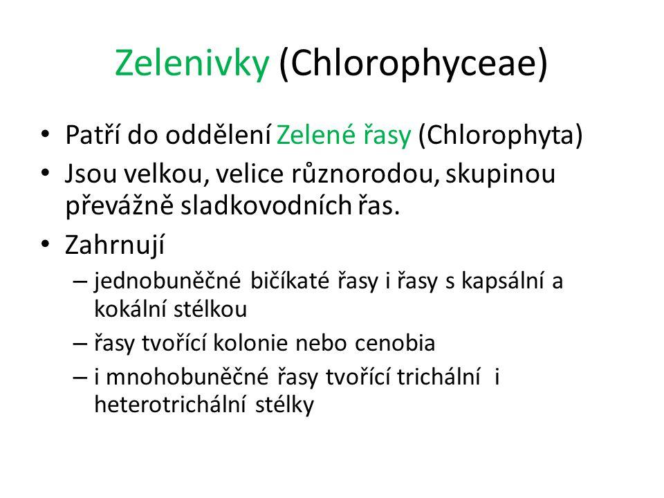 Zelenivky (Chlorophyceae) Patří do oddělení Zelené řasy (Chlorophyta) Jsou velkou, velice různorodou, skupinou převážně sladkovodních řas. Zahrnují –