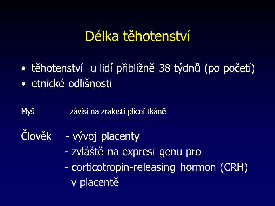 Délka těhotenství těhotenství u lidí přibližně 38 týdnů (po početí) etnické odlišnosti Myš závisí na zralosti plicní tkáně Člověk - vývoj placenty - zvláště na expresi genu pro - corticotropin-releasing hormon (CRH) v placentě