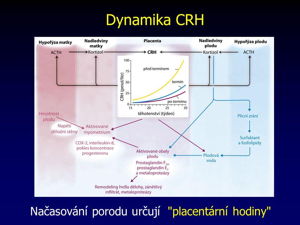 Dynamika CRH Načasování porodu určují placentární hodiny