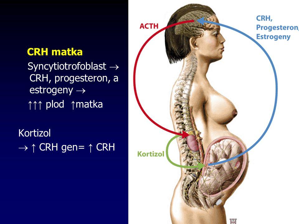 CRH matka Syncytiotrofoblast  CRH, progesteron, a estrogeny  ↑↑↑ plod ↑ matka Kortizol  ↑ CRH gen= ↑ CRH