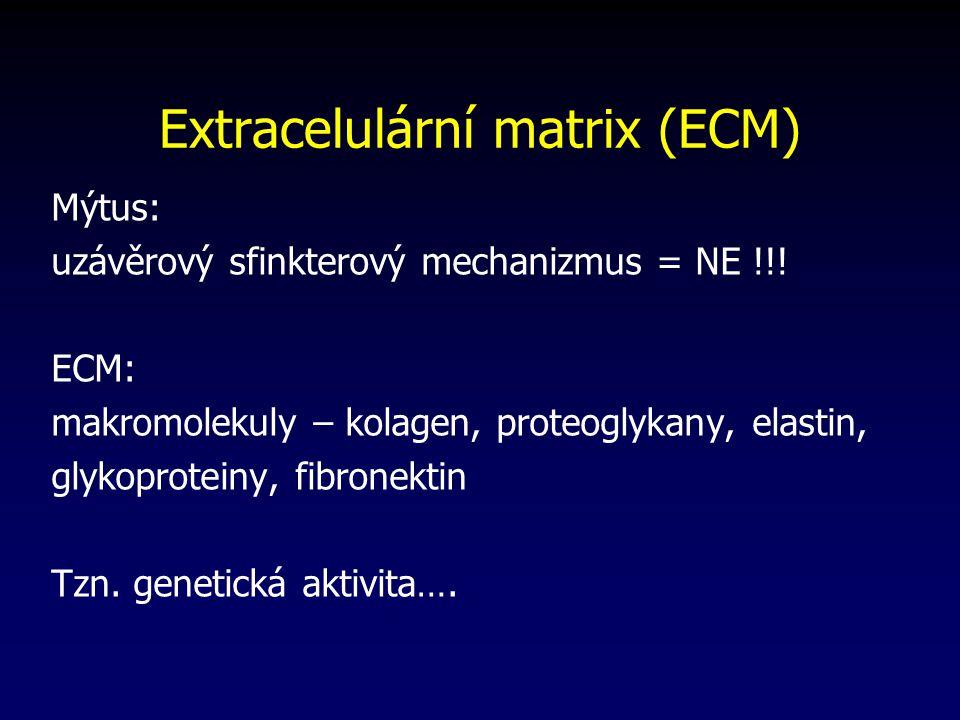 Extracelulární matrix (ECM) Mýtus: uzávěrový sfinkterový mechanizmus = NE !!.