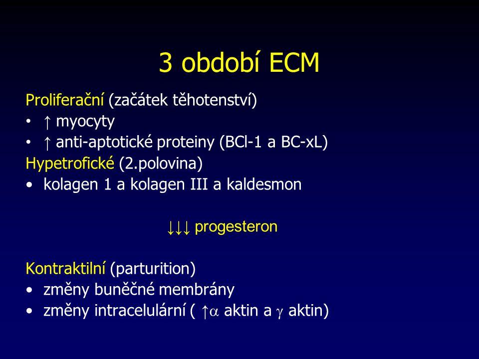 3 období ECM Proliferační (začátek těhotenství) ↑ myocyty ↑ anti-aptotické proteiny (BCl-1 a BC-xL) Hypetrofické (2.polovina) kolagen 1 a kolagen III a kaldesmon ↓↓↓ progesteron Kontraktilní (parturition) změny buněčné membrány změny intracelulární ( ↑  aktin a  aktin)