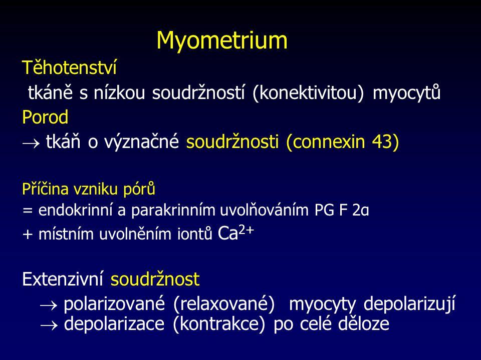 Myometrium Těhotenství tkáně s nízkou soudržností (konektivitou) myocytů Porod  tkáň o význačné soudržnosti (connexin 43) Příčina vzniku pórů = endokrinní a parakrinním uvolňováním PG F 2α + místním uvolněním iontů Ca 2+ Extenzivní soudržnost  polarizované (relaxované) myocyty depolarizují  depolarizace (kontrakce) po celé děloze