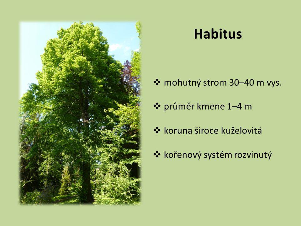 Habitus  mohutný strom 30–40 m vys.  průměr kmene 1–4 m  koruna široce kuželovitá  kořenový systém rozvinutý