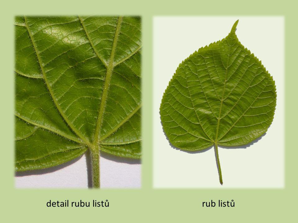 detail rubu listůrub listů