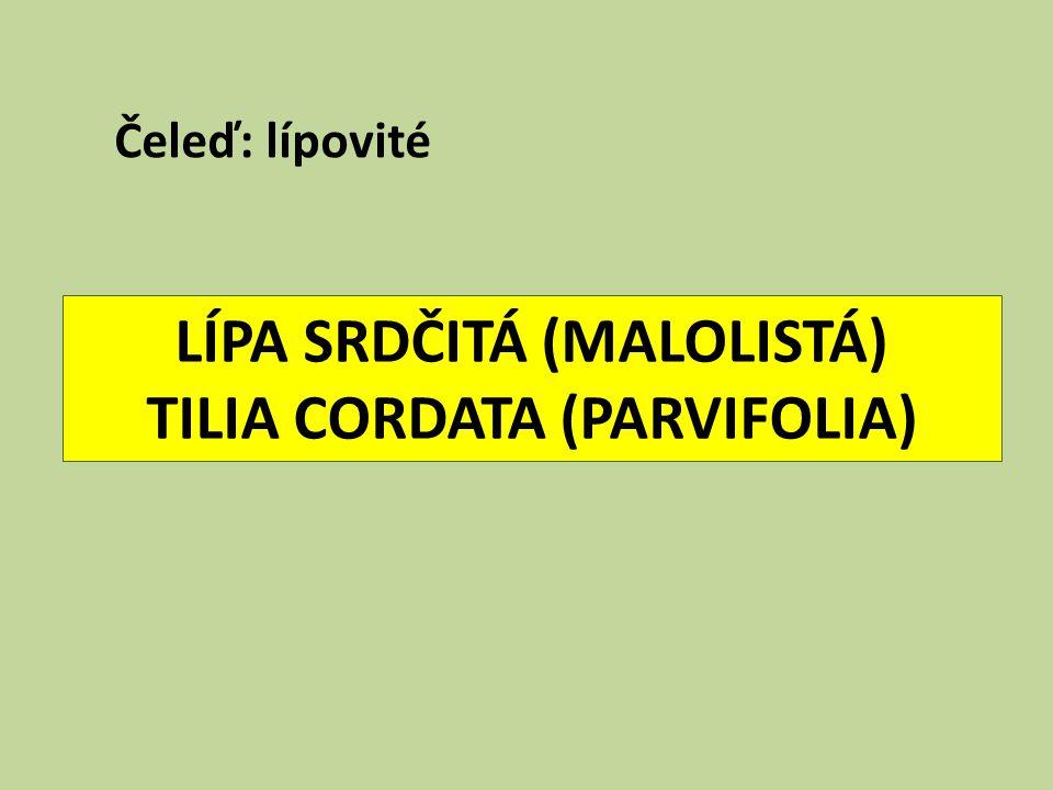 LÍPA SRDČITÁ (MALOLISTÁ) TILIA CORDATA (PARVIFOLIA) Čeleď: lípovité