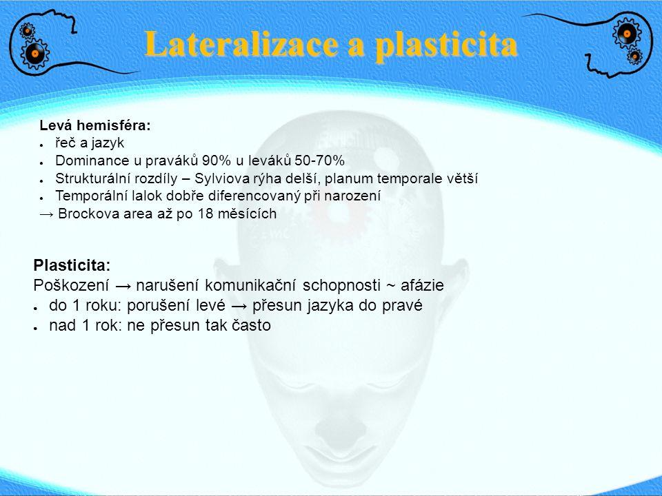 Lateralizace a plasticita Levá hemisféra: ● řeč a jazyk ● Dominance u praváků 90% u leváků 50-70% ● Strukturální rozdíly – Sylviova rýha delší, planum