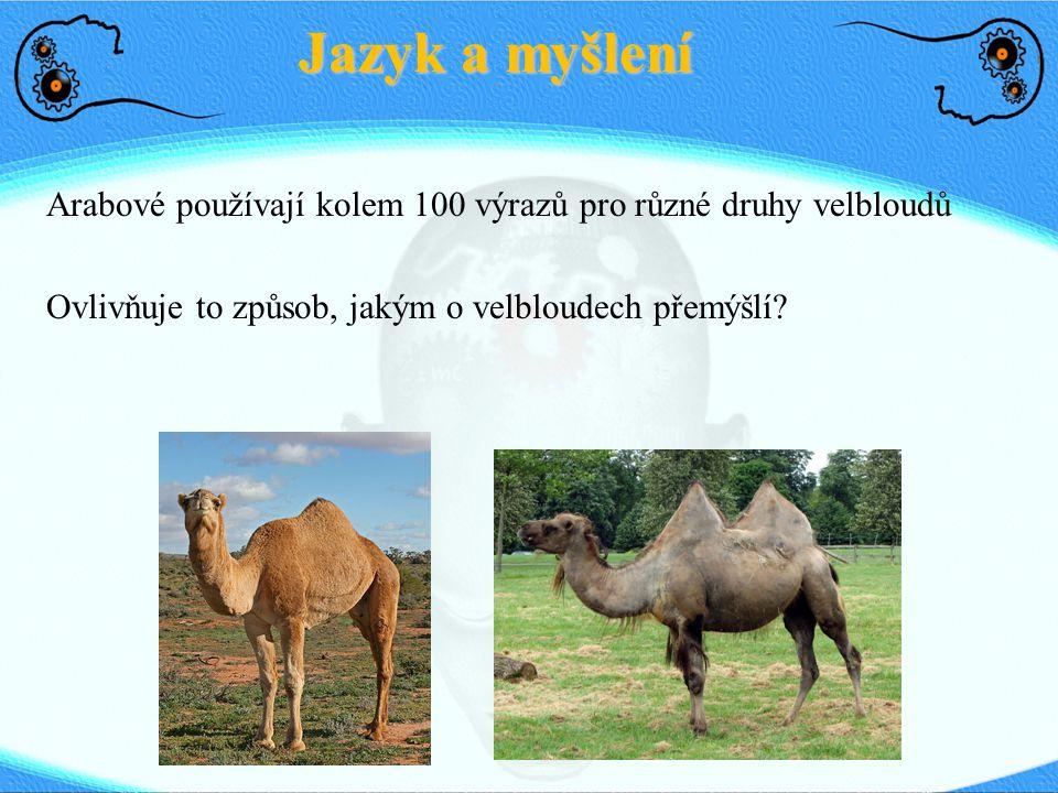 Arabové používají kolem 100 výrazů pro různé druhy velbloudů Ovlivňuje to způsob, jakým o velbloudech přemýšlí? Jazyk a myšlení