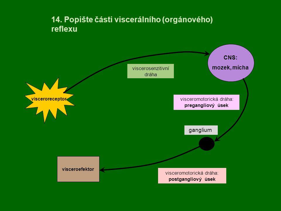 ganglium visceromotorická dráha: pregangliový úsek 14. Popište části viscerálního (orgánového) reflexu visceroreceptor CNS: mozek, mícha visceroefekto