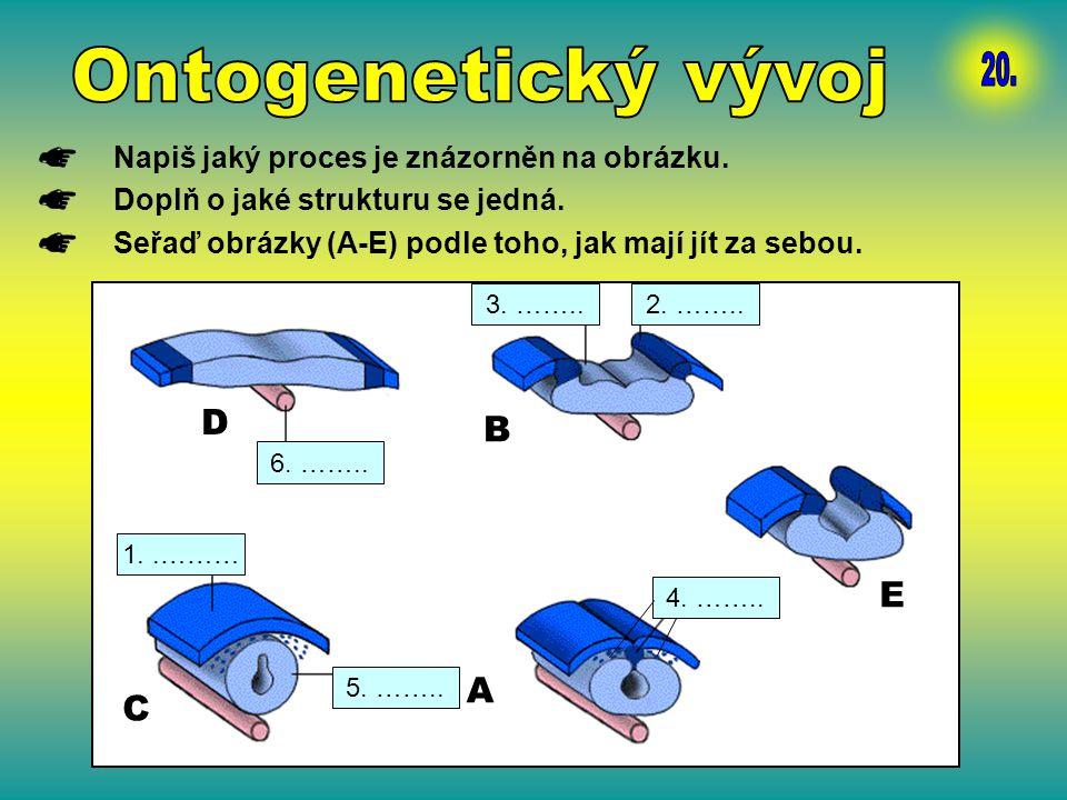 Napiš jaký proces je znázorněn na obrázku. Doplň o jaké strukturu se jedná. Seřaď obrázky (A-E) podle toho, jak mají jít za sebou. D A B C E 5. …….. 4