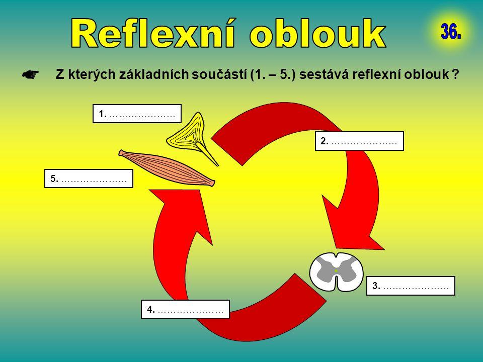 Z kterých základních součástí (1. – 5.) sestává reflexní oblouk ? 1. ………………… 2. ………………… 3. ………………… 4. ………………… 5. …………………