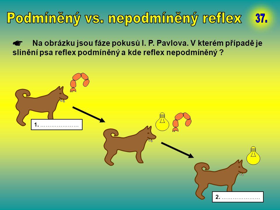 Na obrázku jsou fáze pokusů I. P. Pavlova. V kterém případě je slinění psa reflex podmíněný a kde reflex nepodmíněný ? 1. ………………… 2. …………………