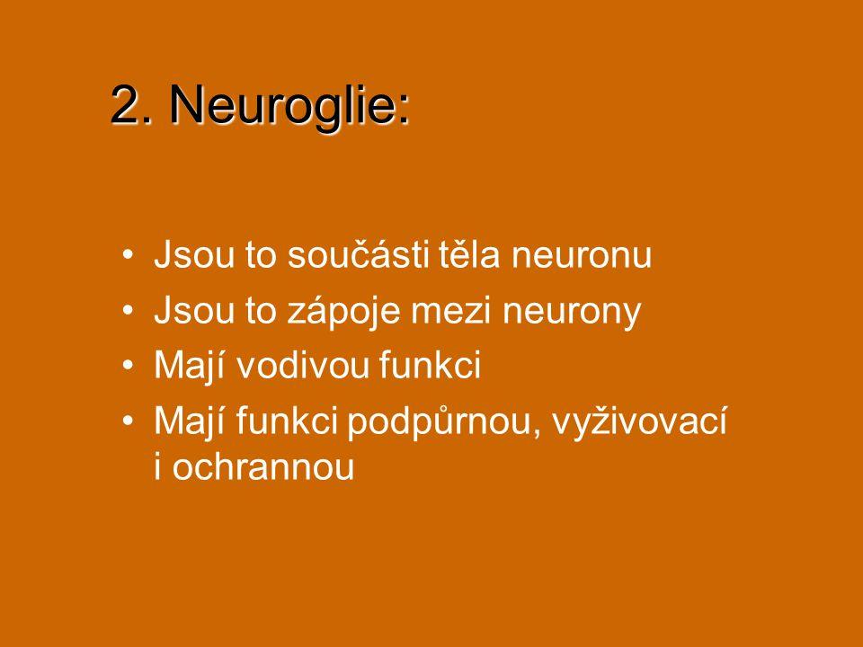 2. Neuroglie: Jsou to součásti těla neuronu Jsou to zápoje mezi neurony Mají vodivou funkci Mají funkci podpůrnou, vyživovací i ochrannou