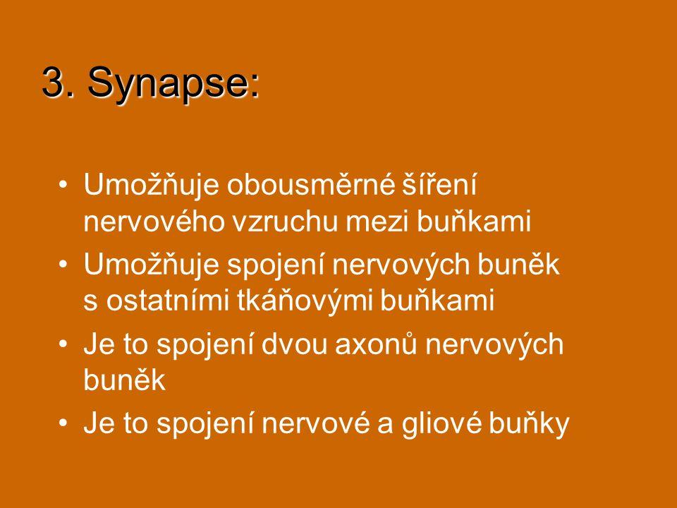 3. Synapse: Umožňuje obousměrné šíření nervového vzruchu mezi buňkami Umožňuje spojení nervových buněk s ostatními tkáňovými buňkami Je to spojení dvo