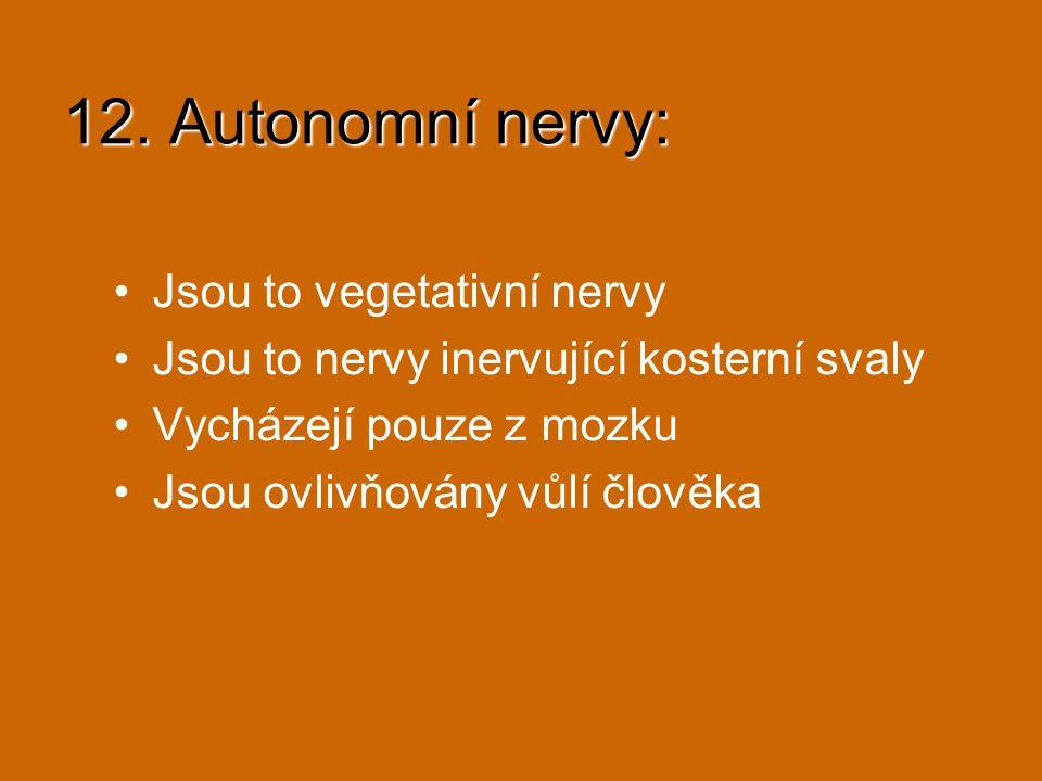 12. Autonomní nervy: Jsou to vegetativní nervy Jsou to nervy inervující kosterní svaly Vycházejí pouze z mozku Jsou ovlivňovány vůlí člověka