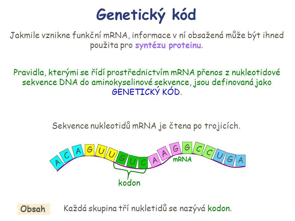 Genetický kód Jakmile vznikne funkční mRNA, informace v ní obsažená může být ihned použita pro syntézu proteinu. Pravidla, kterými se řídí prostřednic