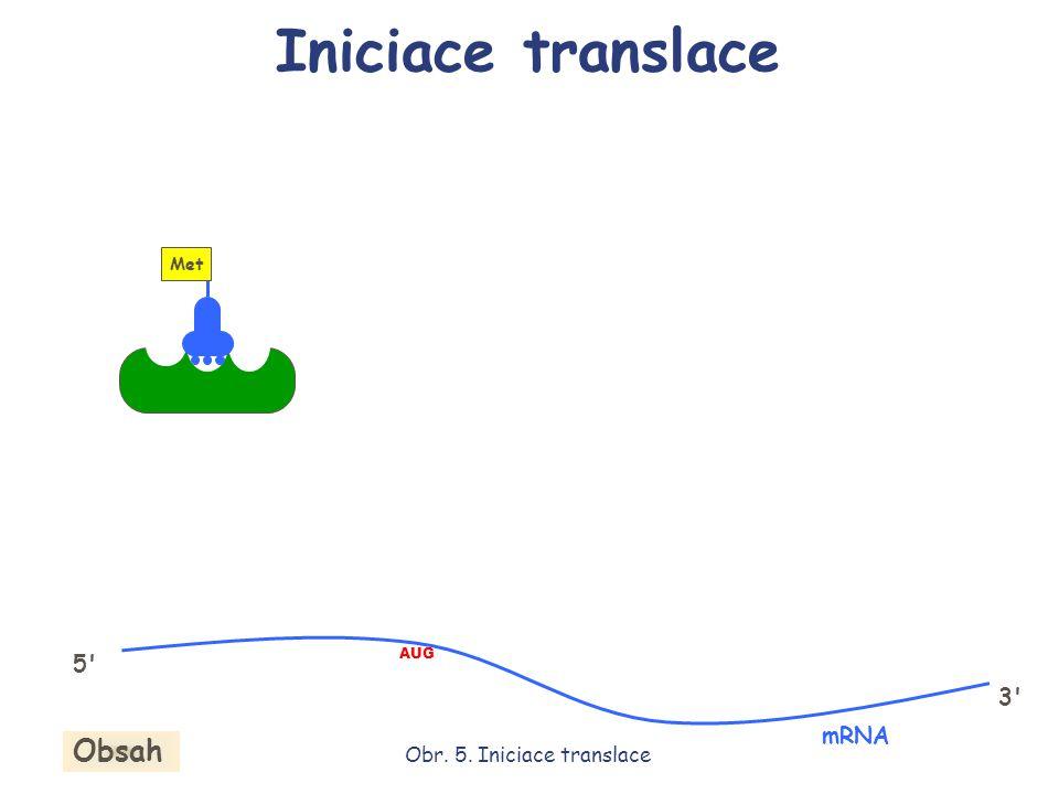 AUG mRNA 5' 3' Obr. 5. Iniciace translace Iniciace translace Obsah