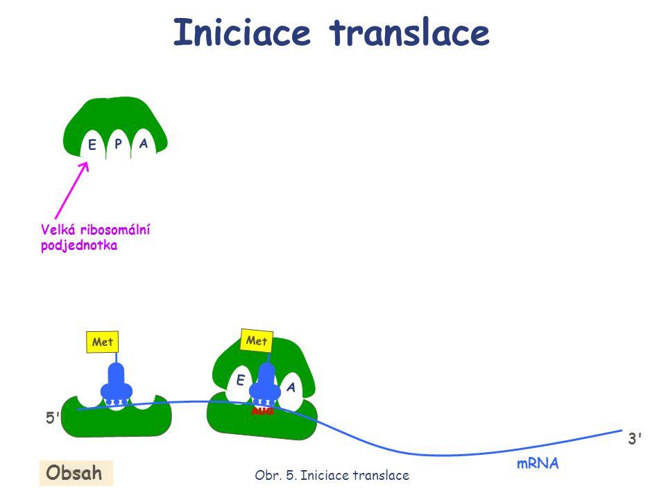 E P A E P A Met AUG mRNA 5' 3' Velká ribosomální podjednotka Iniciace translace Obr. 5. Iniciace translace Obsah