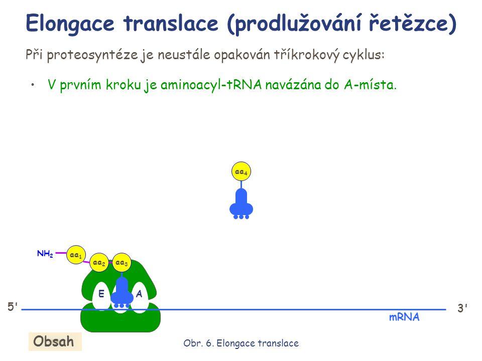 EPA 5' 3' Při proteosyntéze je neustále opakován tříkrokový cyklus: V prvním kroku je aminoacyl-tRNA navázána do A-místa. aa 3 aa 2 aa 1 NH 2 mRNA aa