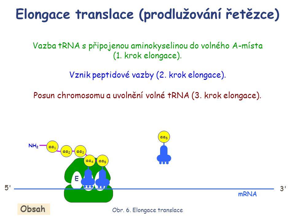 Elongace translace (prodlužování řetězce) EPA 5' 3' mRNA Obr. 6. Elongace translace Obsah aa 3 aa 2 aa 1 NH 2 aa 4 aa 5 Vazba tRNA s připojenou aminok