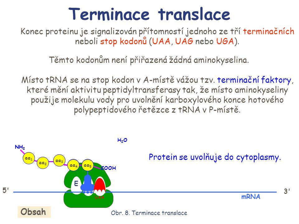 EPA 3' mRNA Konec proteinu je signalizován přítomností jednoho ze tří terminačních neboli stop kodonů (UAA, UAG nebo UGA). Těmto kodonům není přiřazen