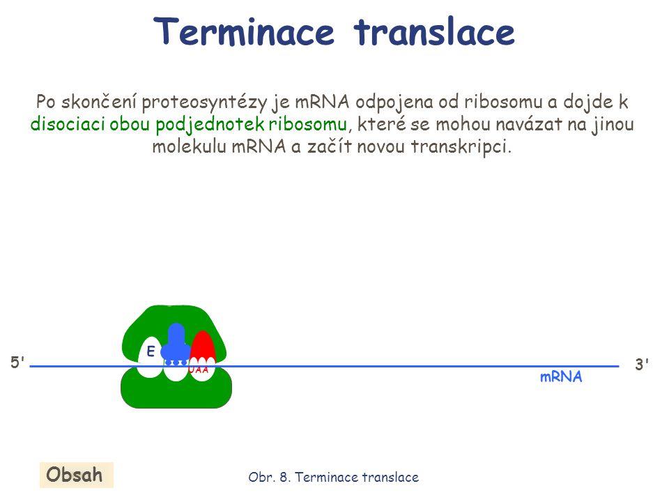 E P A 3' mRNA 5' UAA Po skončení proteosyntézy je mRNA odpojena od ribosomu a dojde k disociaci obou podjednotek ribosomu, které se mohou navázat na j