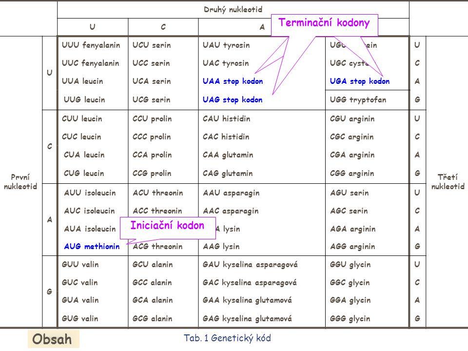 tRNA Kodony v mRNA nerozpoznávají přímo aminokyseliny, které specifikují.