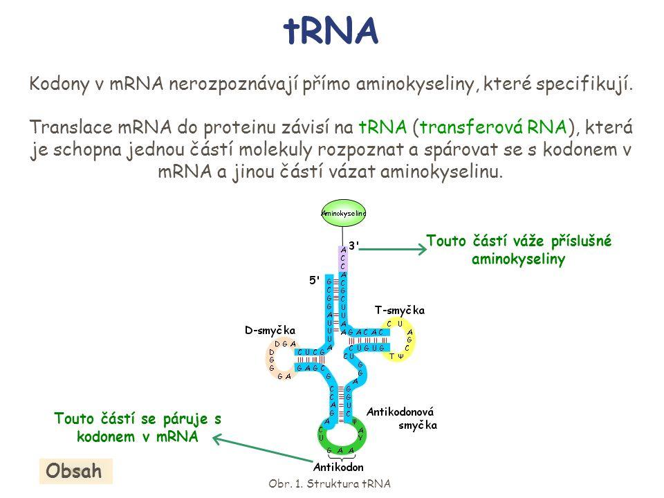 tRNA Kodony v mRNA nerozpoznávají přímo aminokyseliny, které specifikují. Translace mRNA do proteinu závisí na tRNA (transferová RNA), která je schopn