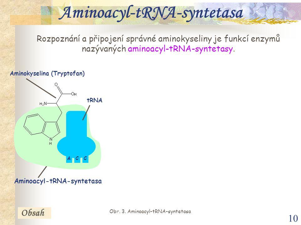 10 Aminoacyl-tRNA-syntetasa Rozpoznání a připojení správné aminokyseliny je funkcí enzymů nazývaných aminoacyl-tRNA-syntetasy.
