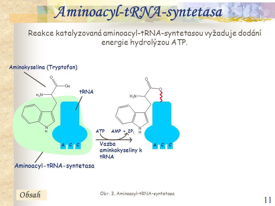 11 Reakce katalyzovaná aminoacyl-tRNA-syntetasou vyžaduje dodání energie hydrolýzou ATP.