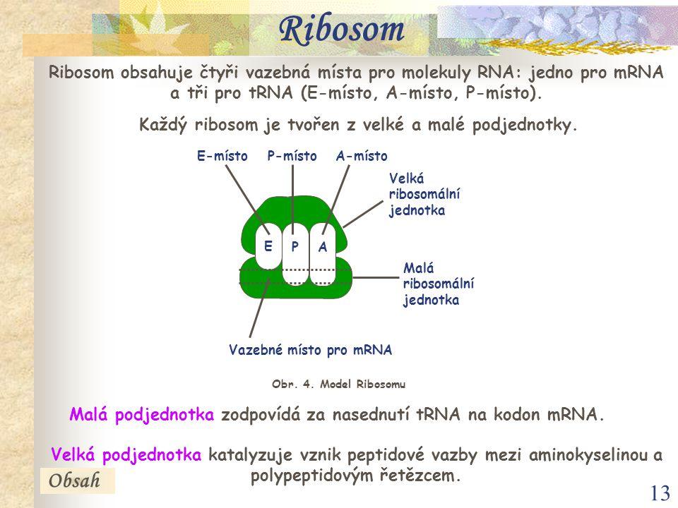 13 Ribosom obsahuje čtyři vazebná místa pro molekuly RNA: jedno pro mRNA a tři pro tRNA (E-místo, A-místo, P-místo).
