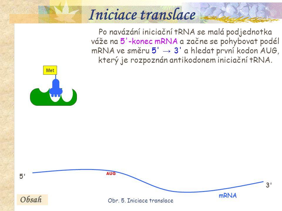 16 Po navázání iniciační tRNA se malá podjednotka váže na 5 -konec mRNA a začne se pohybovat podél mRNA ve směru 5 → 3 a hledat první kodon AUG, který je rozpoznán antikodonem iniciační tRNA.