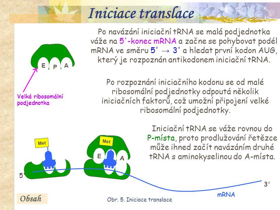 17 E P A AUG P Met AUG Po navázání iniciační tRNA se malá podjednotka váže na 5 -konec mRNA a začne se pohybovat podél mRNA ve směru 5 → 3 a hledat první kodon AUG, který je rozpoznán antikodonem iniciační tRNA.