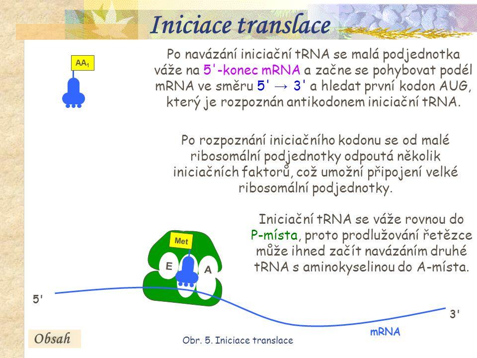 18 AUG P Met AUG Po navázání iniciační tRNA se malá podjednotka váže na 5 -konec mRNA a začne se pohybovat podél mRNA ve směru 5 → 3 a hledat první kodon AUG, který je rozpoznán antikodonem iniciační tRNA.