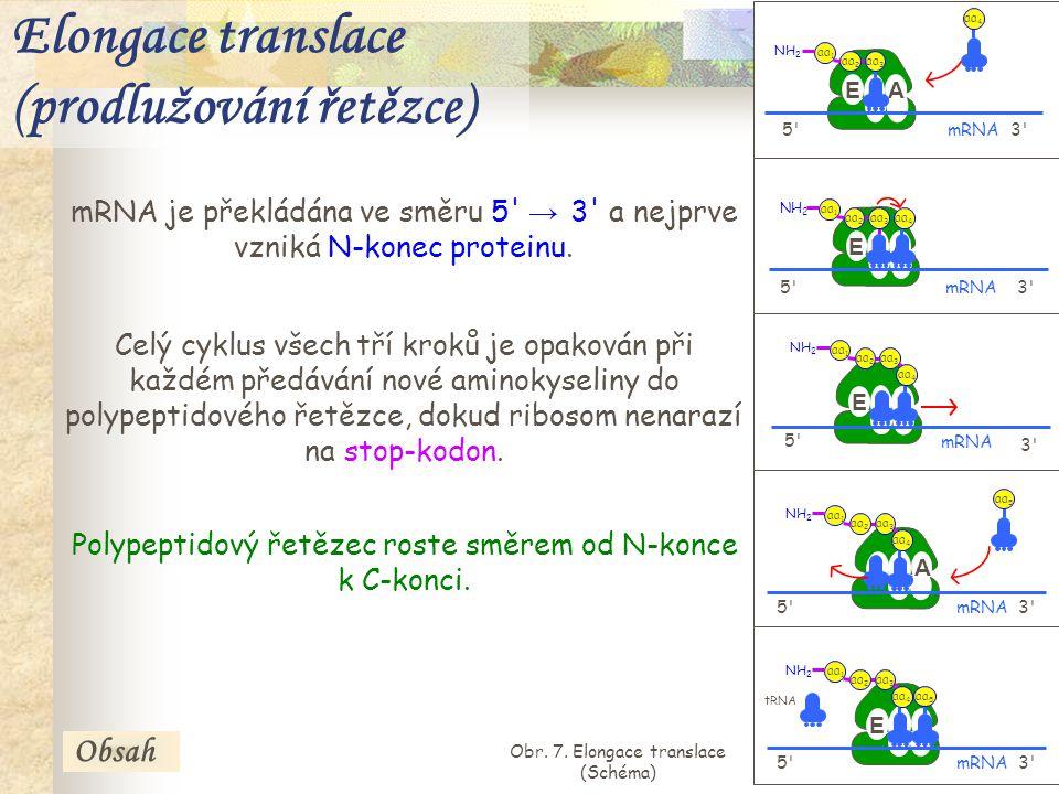 22 5 3 P E P A aa 3 aa 2 aa 1 NH 2 mRNA aa 4 5 3 P E P A mRNA aa 3 aa 2 aa 1 NH 2 aa 4 5 3 mRNA A E P E P aa 3 aa 2 aa 1 NH 2 aa 4 aa 5 5 3 mRNA A E P E P aa 3 aa 2 aa 1 NH 2 aa 4 5 3 mRNA A E P E P aa 3 aa 2 aa 1 NH 2 aa 4 aa 5 tRNA mRNA je překládána ve směru 5 → 3 a nejprve vzniká N-konec proteinu.