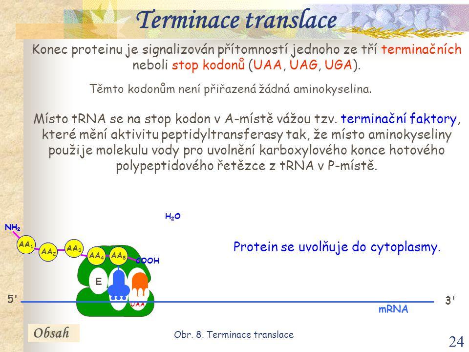 24 E P A 3 mRNA Konec proteinu je signalizován přítomností jednoho ze tří terminačních neboli stop kodonů (UAA, UAG, UGA).