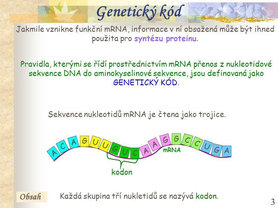 3 Genetický kód Jakmile vznikne funkční mRNA, informace v ní obsažená může být ihned použita pro syntézu proteinu.