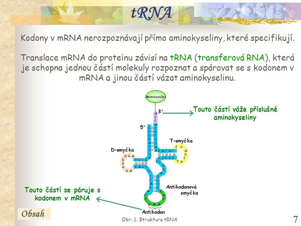 7 tRNA Kodony v mRNA nerozpoznávají přímo aminokyseliny, které specifikují.