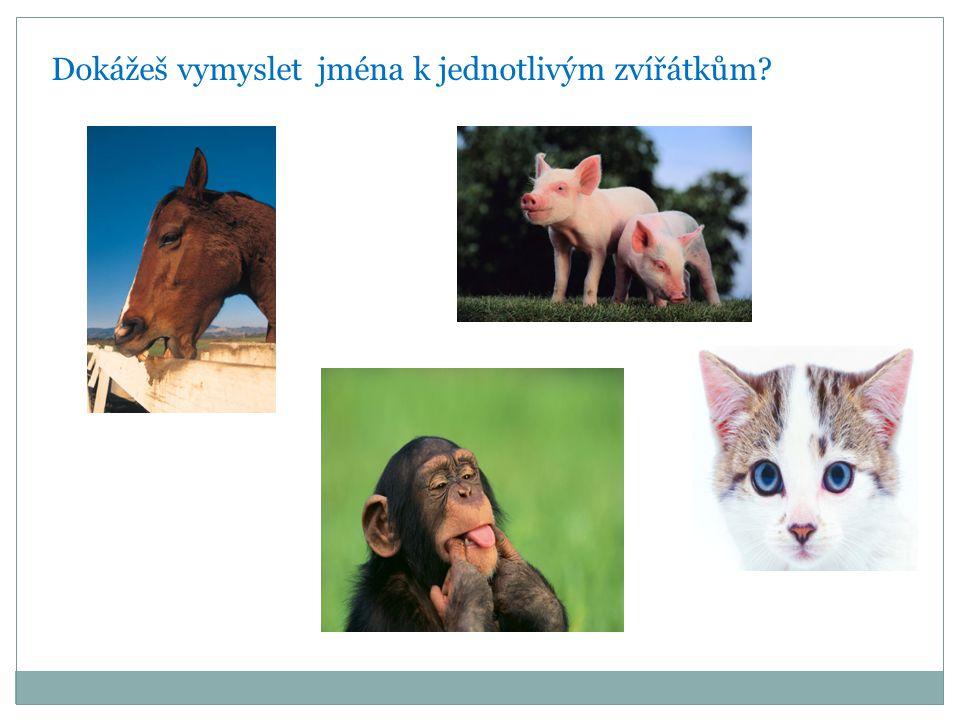 Dokážeš vymyslet jména k jednotlivým zvířátkům?